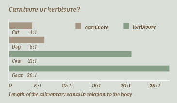 Length of the alimentary canal in relation to the body