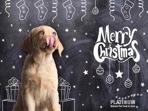 PLATINUM Christmas 4