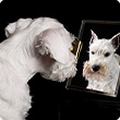 The coat of your dog: The mirror of its health
