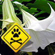 Poisonous garden plants for dogs